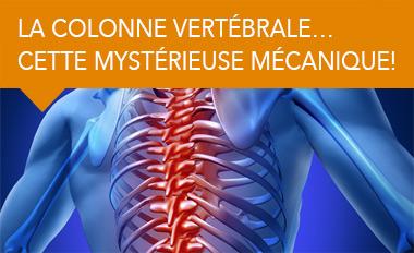 La colonne vertébrale… cette mystérieuse mécanique!